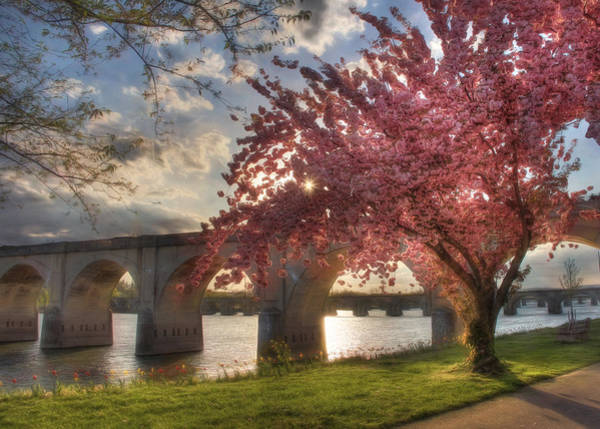 Flowering Trees Photograph - The Last Glimmer by Lori Deiter