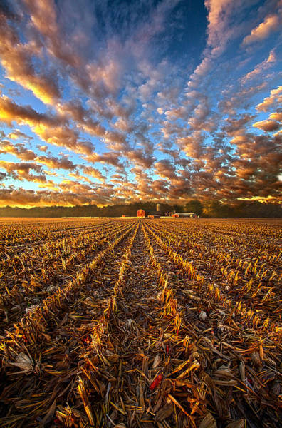Photograph - The Last Harvest by Phil Koch