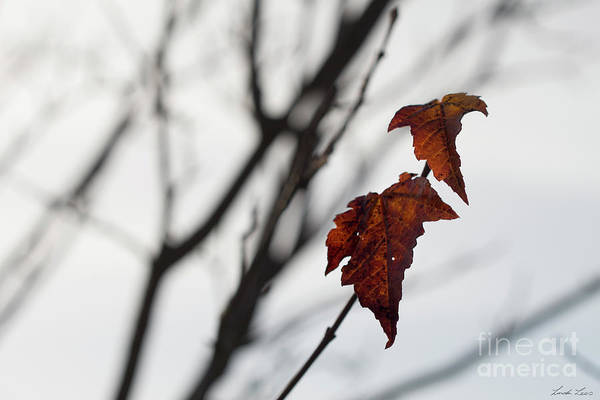 Wall Art - Photograph - The Last Leaves Of Autumn by Linda Lees