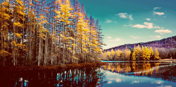Photograph - The Last Of The Tamarack Color by David Patterson