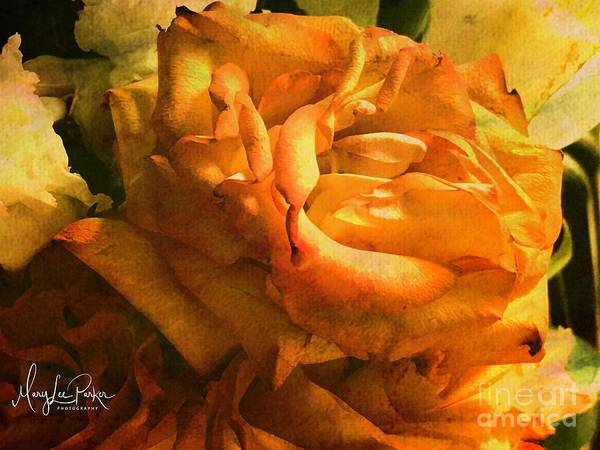 Photograph - The Last Rose by MaryLee Parker