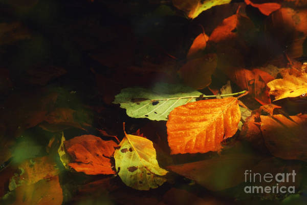 Wall Art - Photograph - The Last Sunray by Wedigo Ferchland