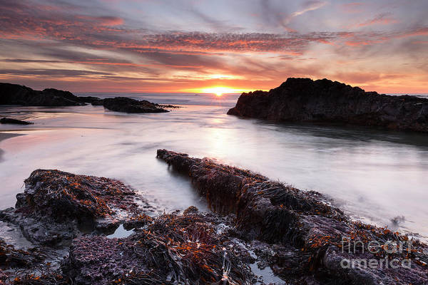 Awe Photograph - The Last Sunset On The Oregon Coast by Masako Metz