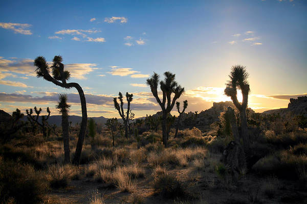Joshua Tree National Park Wall Art - Photograph - The Last Time I Touched You by Laurie Search