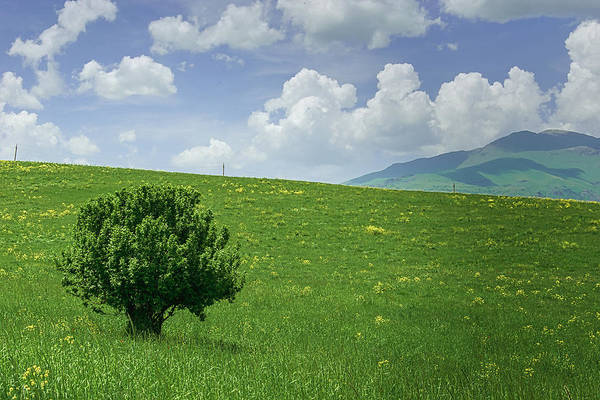 Wall Art - Photograph - The Last Tree Standing by Rabiri Us