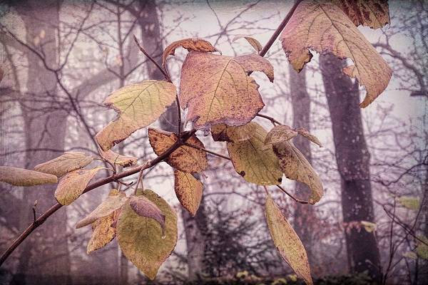 Wall Art - Photograph - The Last Winter Leaves by Antique Images
