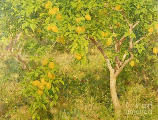 Fruit Trees Wall Art - Painting - The Lemon Tree by Henry Scott Tuke