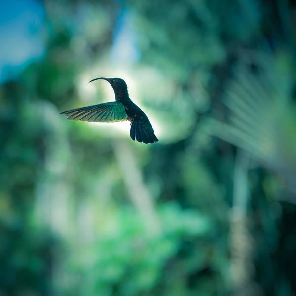Photograph - The Levitation by Radek Spanninger