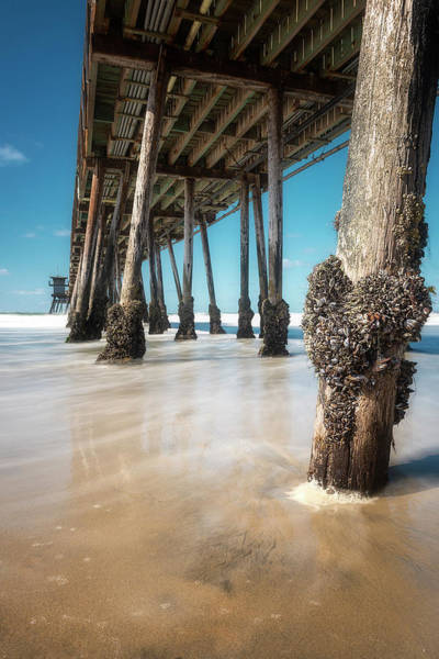 Wall Art - Photograph - The Life Of A Barnacle by Ryan Manuel
