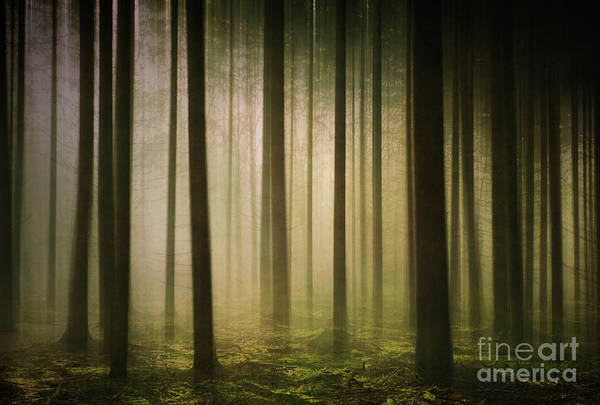 The Light In The Woods Art Print