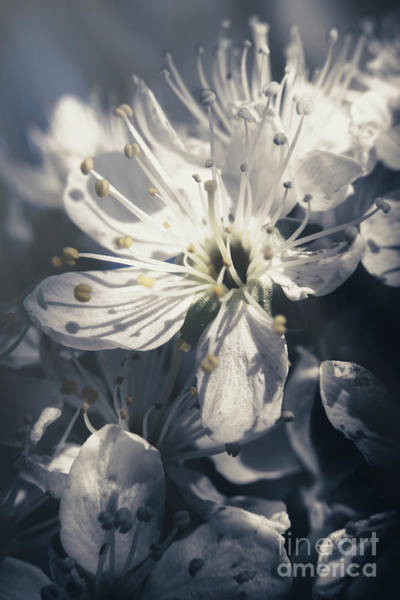 Wall Art - Photograph - The Light Of Spring Petals by Jorgo Photography - Wall Art Gallery