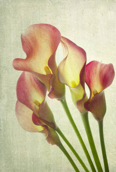 Pink Lily Photograph - The Light Within by Rebecca Cozart