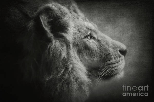 Photograph - The Lion B/w by Angela Doelling AD DESIGN Photo and PhotoArt