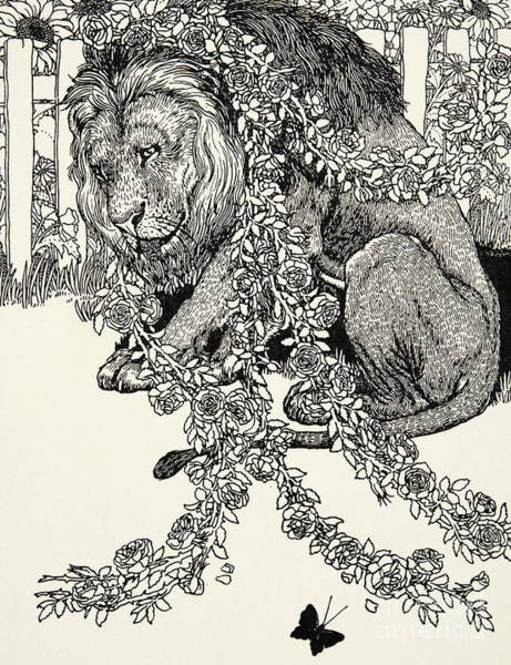 Wall Art - Drawing - The Lion In Love, From A Hundred Fables Of Aesop by Percy J Billinghurst