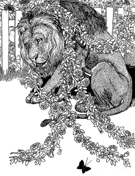 Wall Art - Drawing - The Lion In Love by Percy J Billinghurst