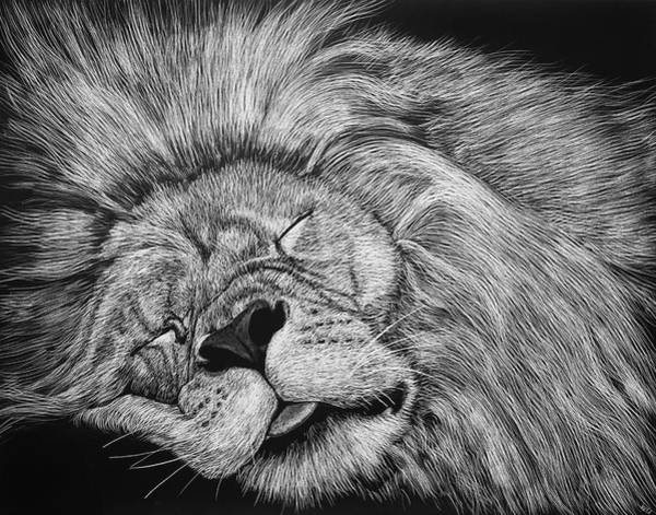 Drawing - The Lion Sleeps Tonight by William Underwood