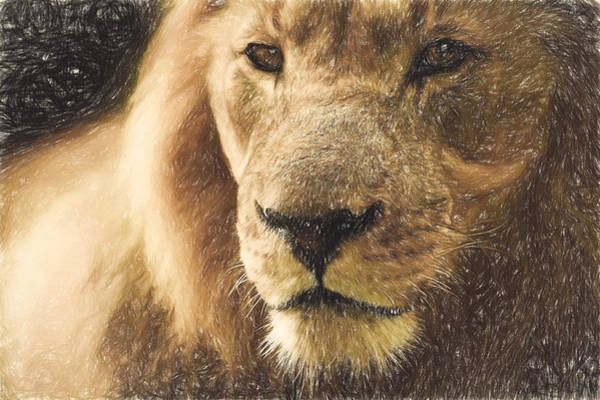Beautiful Park Drawing - The Lion by Theo Westlake