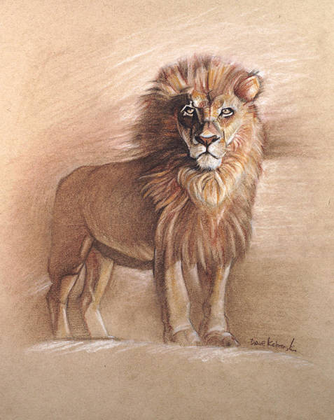 African Animal Drawing - The Lion - Wildlife Drawing by Dave Kobrenski