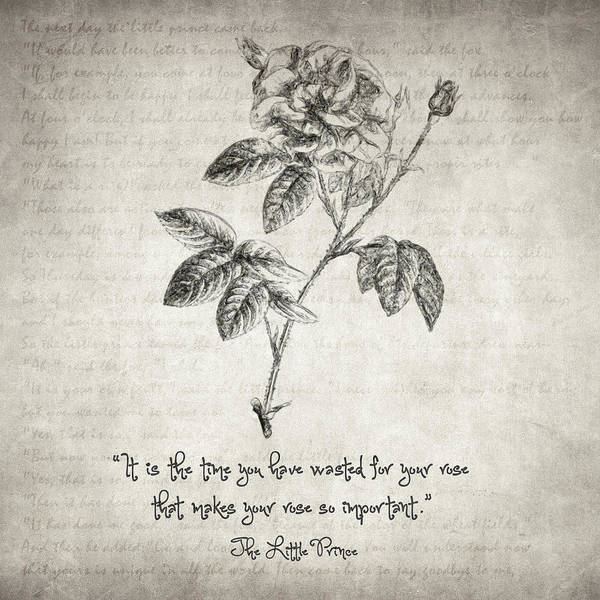 Drawing - The Little Prince Rose Quote by Zapista Zapista
