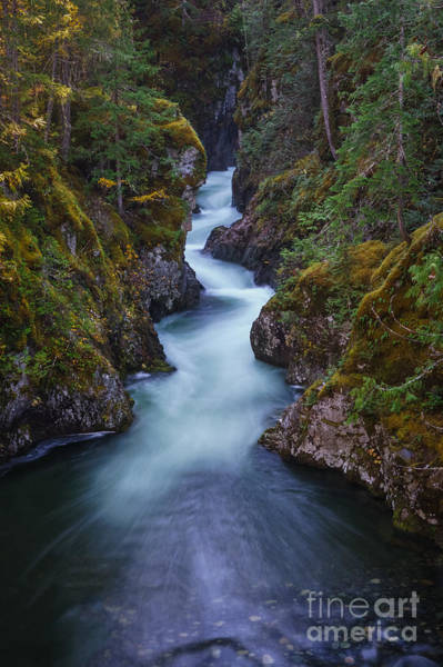 Photograph - The Little River by Carrie Cole