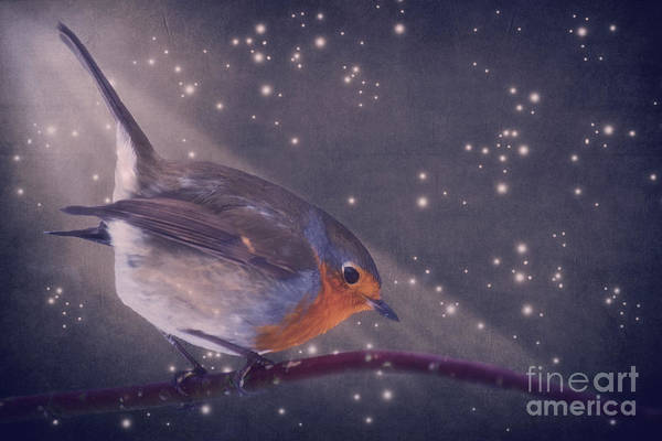Mixed Media - The Little Robin At The Night by Angela Doelling AD DESIGN Photo and PhotoArt