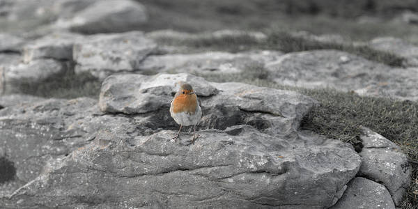 Dun Photograph - The Little Wise Follower by Betsy Knapp