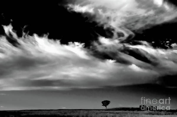 Photograph - The Liverpool Plains - Bw by Werner Padarin