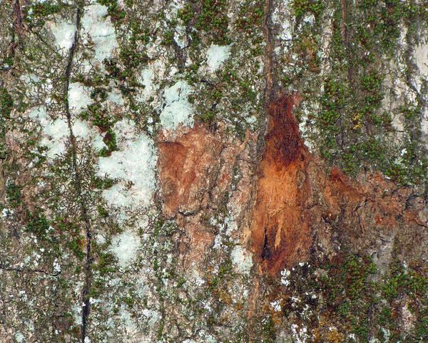 Photograph - The Living Bark by Lynda Lehmann