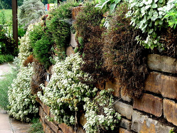 Photograph - The Living Wall by David Dunham