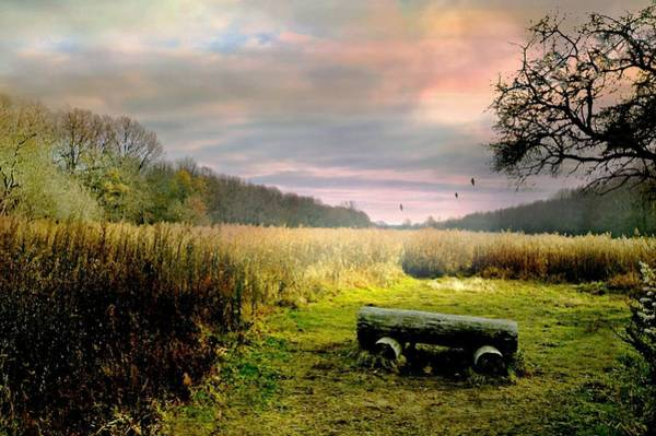 Nature Conservancy Photograph - The Log Bench by Diana Angstadt