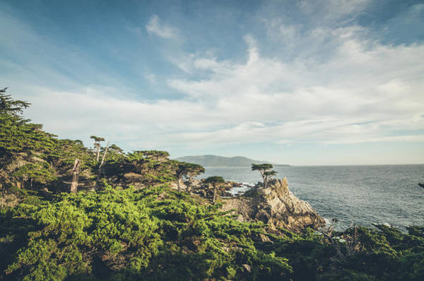 Photograph - The Lone Cypress by Margaret Pitcher