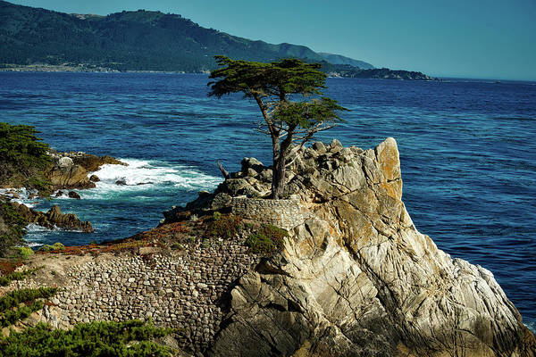 Monterey Cypress Photograph - The Lone Cypress Tree by Mountain Dreams