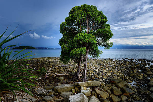 Photograph - The Lone Tree by Michael Scott