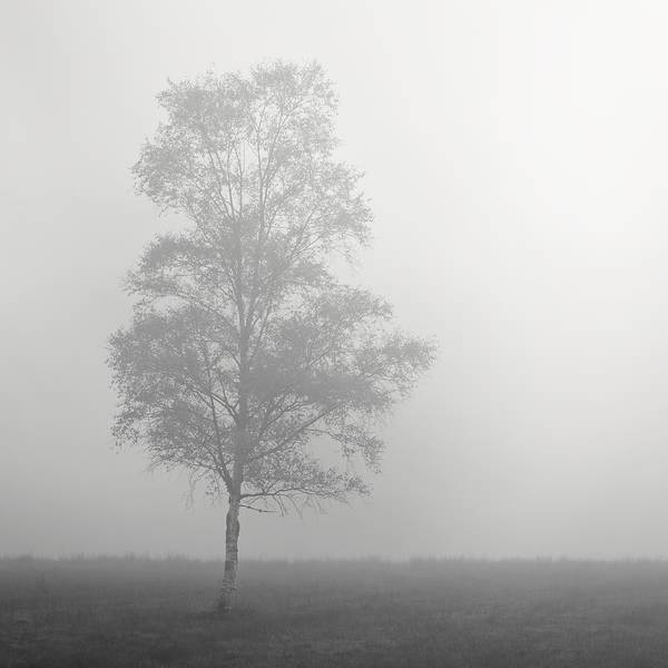 Photograph - The Lone Tree by Stephen Taylor
