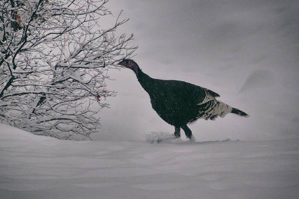 The Lone Turkey Art Print