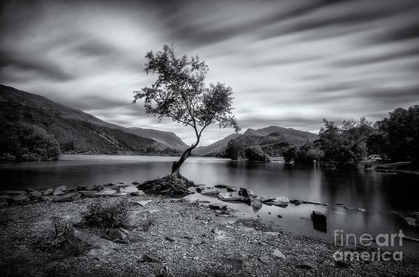 Photograph - The Lonely Tree At Llyn Padarn Lake - Part 2 by Mariusz Talarek