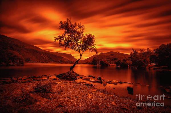 Photograph - The Lonely Tree At Llyn Padarn Lake - Part 3 by Mariusz Talarek