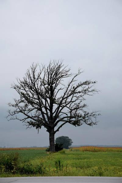 Photograph - The Lonely Tree by Jenny Regan