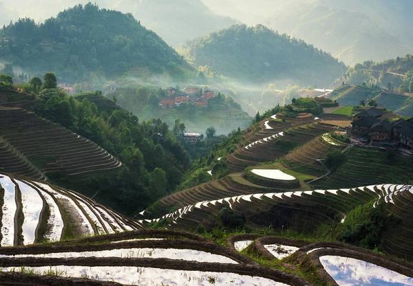 Photograph - The Longji Dragon's Back Terraces by Matt Shiffler