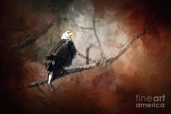 Wall Art - Photograph - The Look Out by Marvin Spates