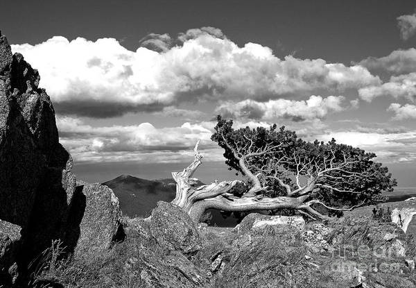 Photograph - The Lookout by Jim Garrison