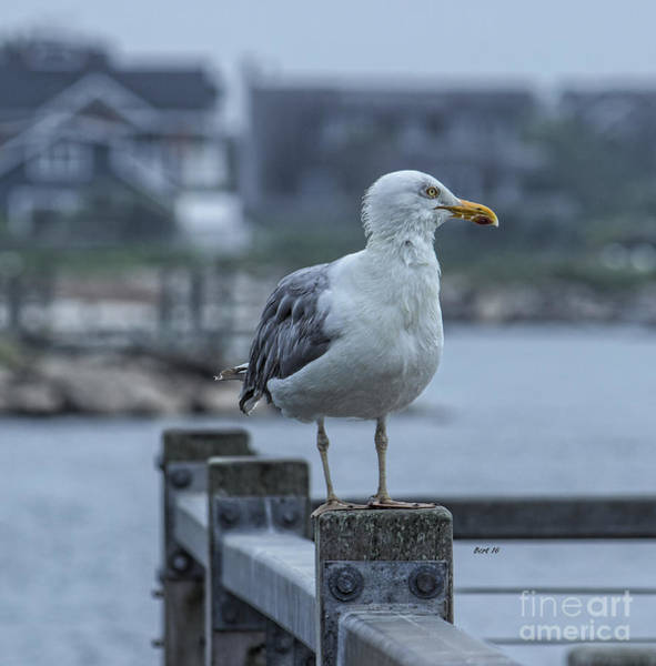 Photograph - The Lookout Sea Bird by Roberta Byram