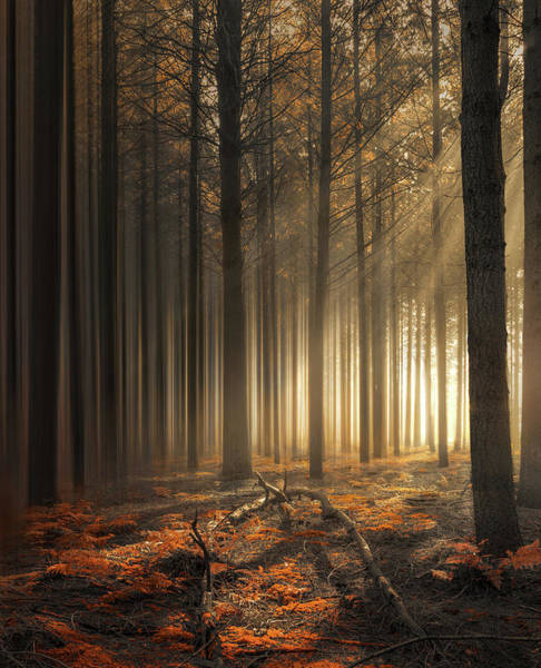 Photograph - The Lost Woods by Rob Visser