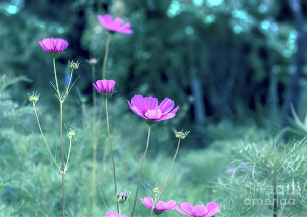 Photograph - The Love Flower by Susan Warren