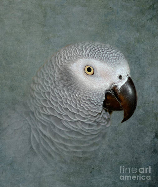 Intelligent Photograph - The Love Of A Gray by Betty LaRue