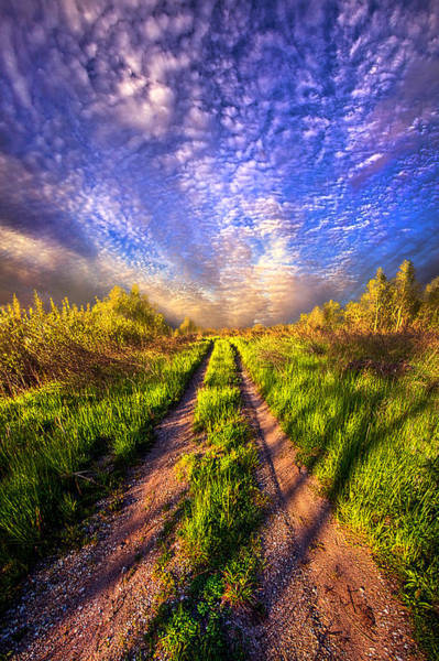 Photograph - The Love Of Life's Journey  by Phil Koch