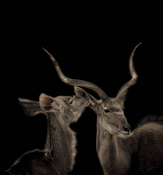 Wall Art - Photograph - The Lovers by Paul Neville