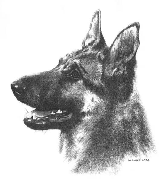 German Shepherd Drawing - The Loyal Shepherd by Louise Howarth