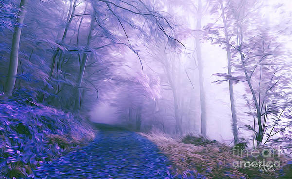 Digital Art - The Magic Forest by Chris Armytage