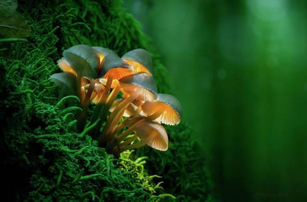 Shrooms Photograph - The Magic Lantern II by Adrian Borda
